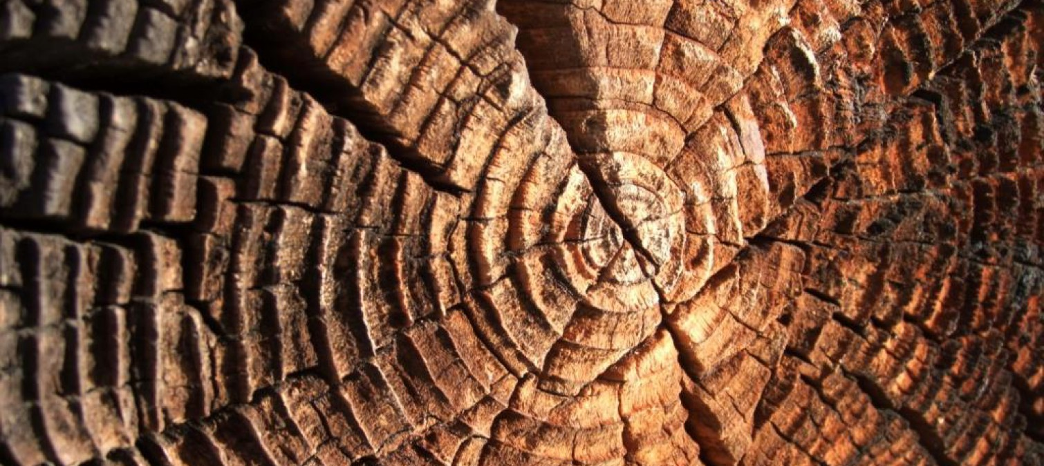 What are the different wood species? Origins and natural properties